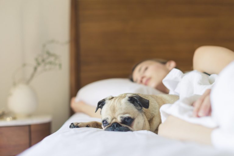 Reasons Why Sleep Is Important For Business Success