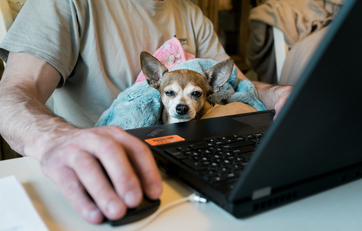 Top Things to Consider Before Becoming a Pet-Friendly Workplace