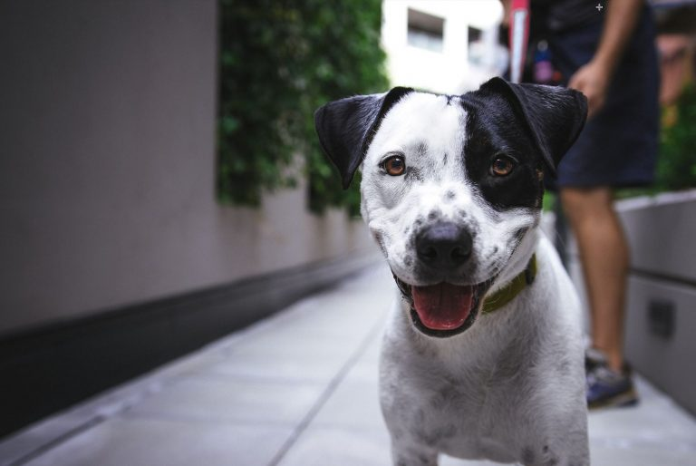Things to Consider Before Becoming a Pet-Friendly Workplace