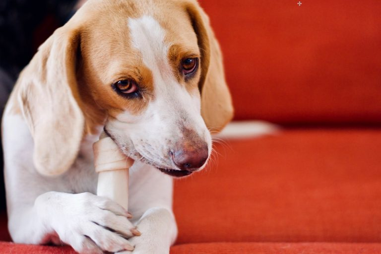 Expert Tips to Exercise Your Dog When You're Stuck Indoors