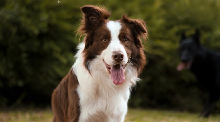 The Top 10 Most Popular Dog Breeds in North America