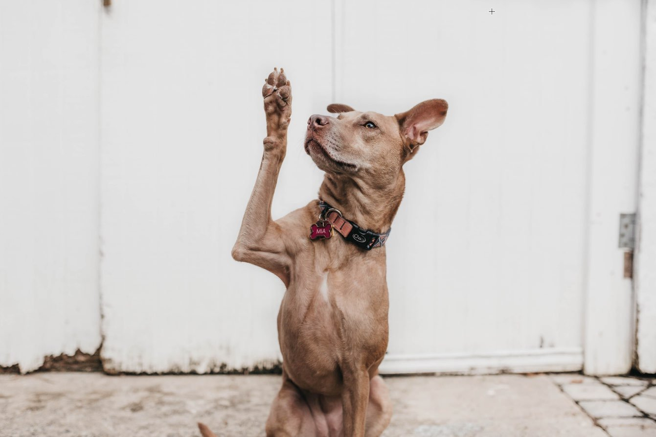 How To Clean Your Dog's Paws And Keeping it That Way