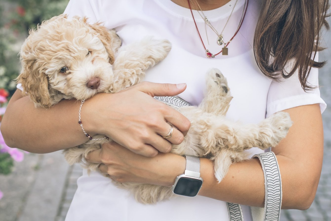 How to Care for Your Pet During COVID-19 Pandemic - veterinarian visits
