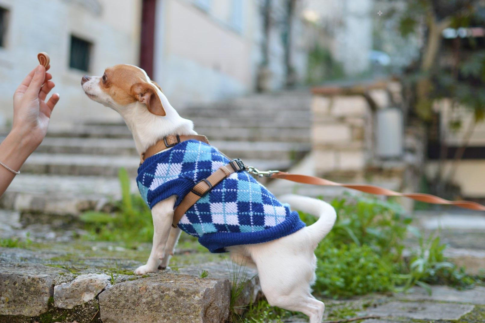 Jinx Launches Dog Wellness Brand That Sells Premium Dog Foods Online