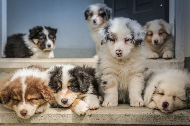 5 Questions to Ask Before You Get a Puppy