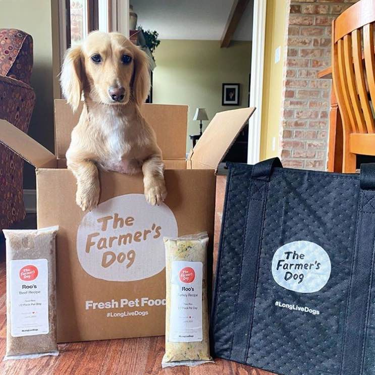 8 Best Dog Food Delivery Service For Health Conscious Pet Parents