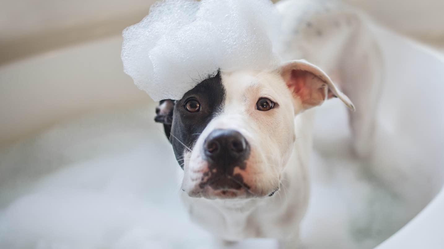 Most Common Mistakes Pet Parents Do While Bathing Their Pets