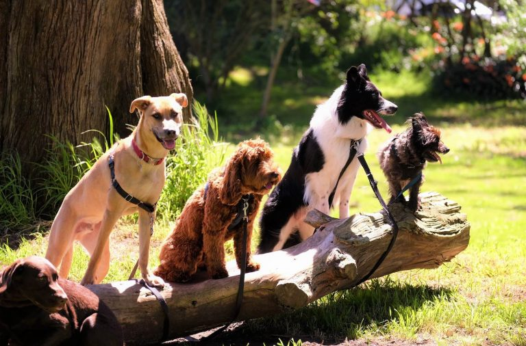 Top 10 Most Frequently Reported Toxins for Dogs