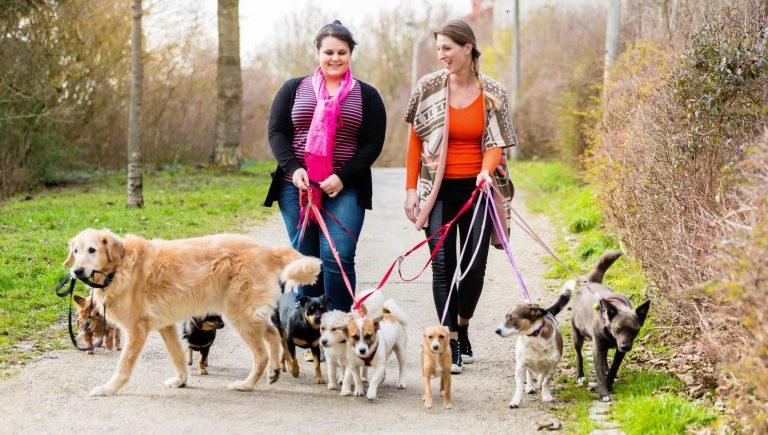 10 Tips for Choosing a Pet Sitter