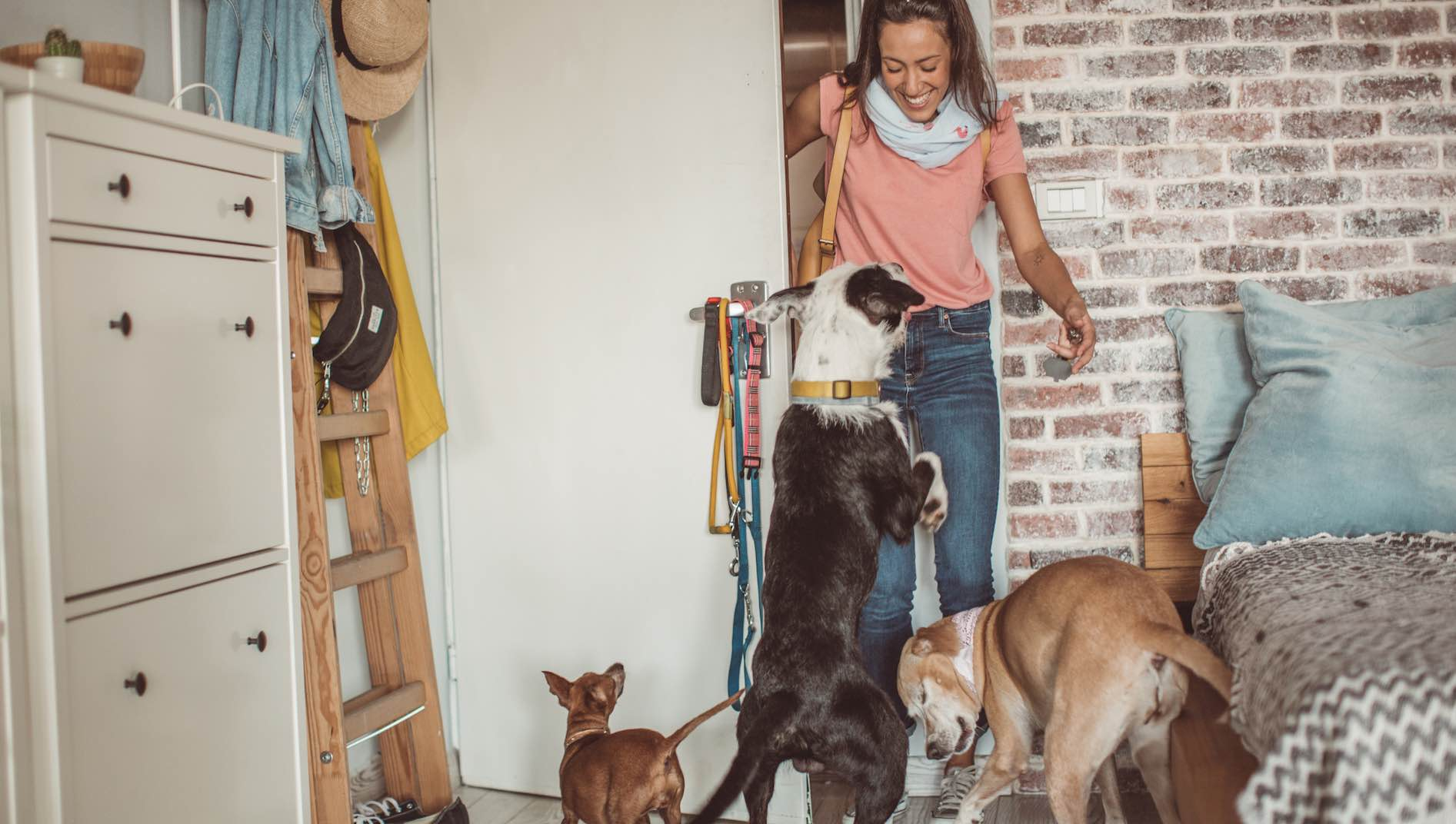 10 Tips for Choosing a Pet Sitter