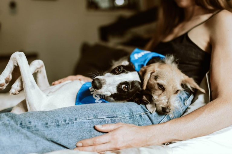 5 Top Reasons Why Your Pet Health Care Bill is Rising
