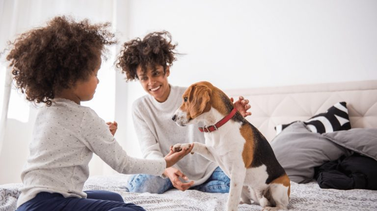What is Pet Insurance, How Does It Work?