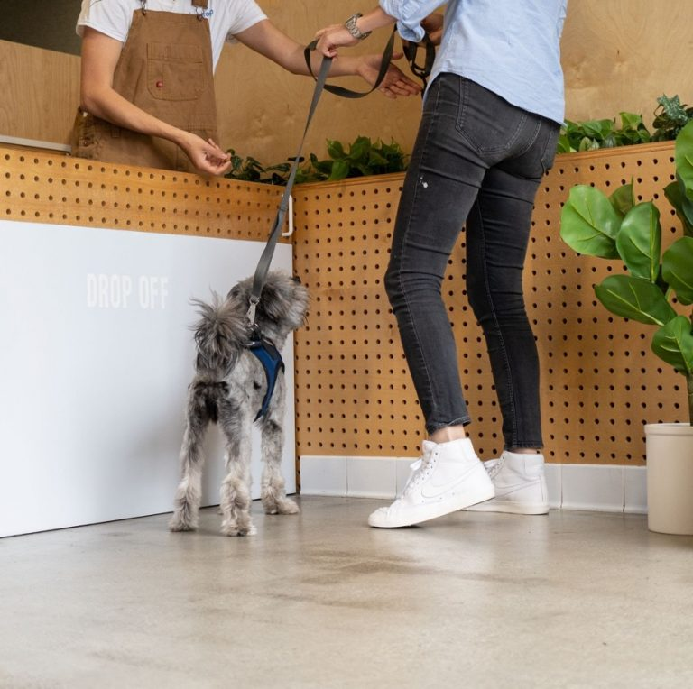Dogdrop, Dog Daycare Offering 1 Free Week to Parents Going Back to Work